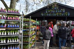 Keukenhof Gift Shop with Clog Planters.jpg
