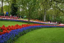 Beautiful Winding Rows of Flowers @ Keukenhof.jpg