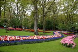Colorful Flowers with Purple Ones as Edges in Keukenhof.jpg