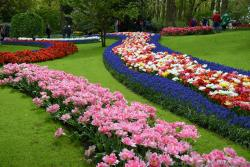 Beautiful Winding Rows of Pink, Red and Purple Flowers @ Keukenhof.jpg