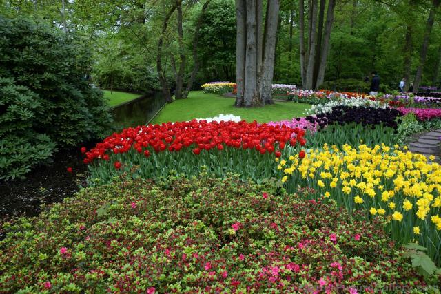 Beautiful Tulip Gardens next to Stream Keukenhofjpg Hi