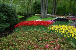 Beautiful Tulip Gardens next to Stream @ Keukenhof.jpg
