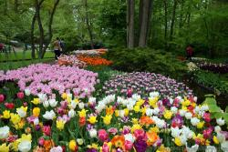 Amazing Collection of Tulips of All Colors @ Keukenhof Gardens.jpg