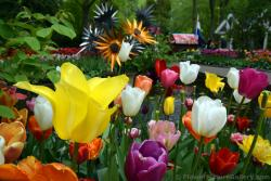 Beatiful Tulips with Metal Flowers in the Background.jpg