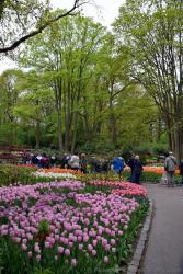 Visitors Appreciating the Beauty of Keukenhof Gardens.jpg