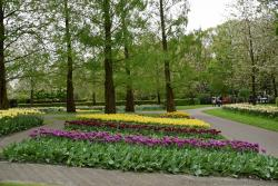 Rows of Tulips with Backdrop of Trees @ Keukenhof.jpg