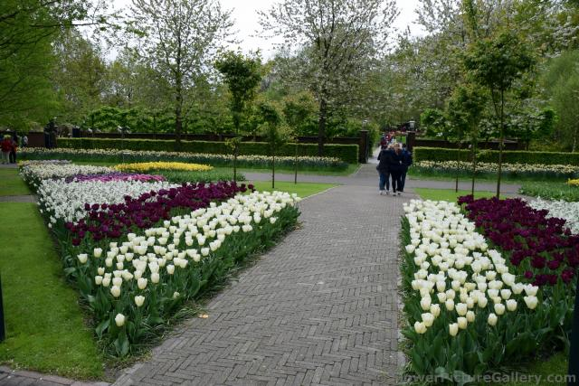 Triangular Garden of Tulips @ Keukenhof.jpg