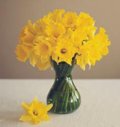 Yellow daffodils bouquet.JPG