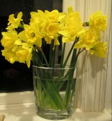 Home bouquet in glass with yellow daffodils.JPG