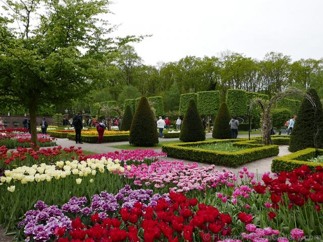 Manicured Cone Trees Amongst Colorful Tulips in Keukenhof.jpg