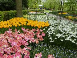 Gardens of Keukenhof in Pink Yellow & White with Pavillion in the background.jpg