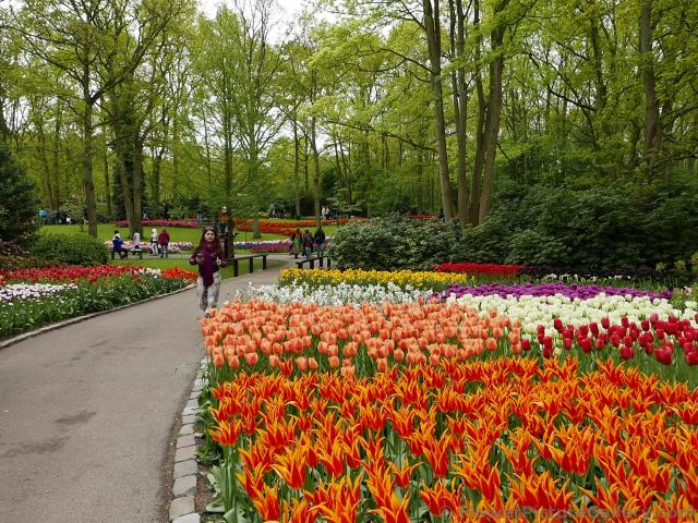 Flaming Red and Light Orange Tulip Gardens @ Keukenhof.jpg