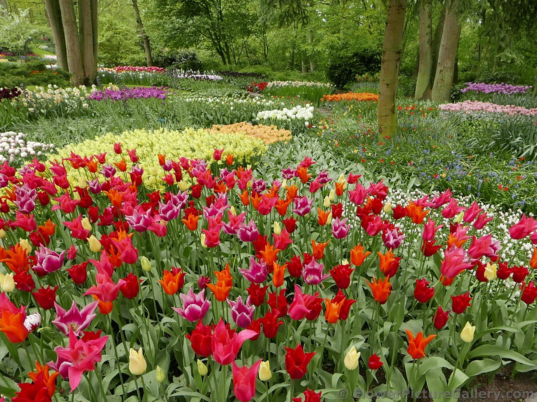 West Side Community Gardens 2021 Tulip Festival - N.Y