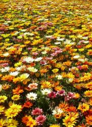 Beautiful summer flowers pictures with full of different colors.JPG
