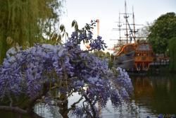 Lilac Flowers with Pirate Ship in Background @ Tivoli Gardens.jpg