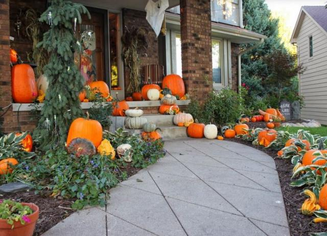 Pumpkin Halloween festive decoration picture.JPG