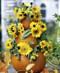 Pumpkin planters with sunflowers.JPG