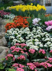 Colorful garden with many different spring flowers phots.JPG