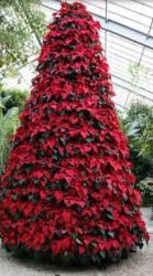 Red flowers Christmas tree with poinsettias.JPG