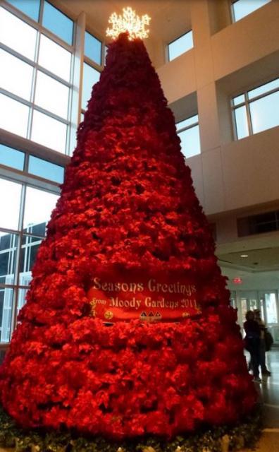 tall poinsettias christmas tree picture jpg
