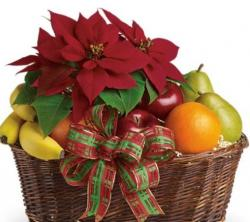 Christmas fruit basket with red poinsettias flowers.JPG