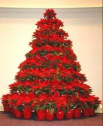 Large poinsettias Christmas trees images.JPG