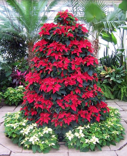 Poinsettia Flowers Christmas Tree.JPG
