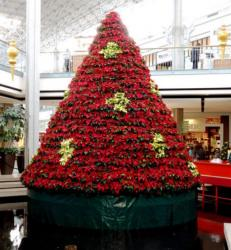 Large red poinsettias flowers Christmas tree with white poinsettias.JPG