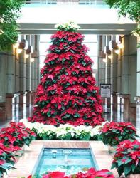 Beautiful red flowers Christmas tree with red poinsettias with white poinsettias Christmas tree topper.JPG