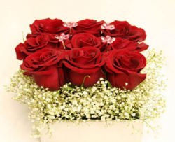 Trendy valentines day romantic arrangement with red roses and small white flowers