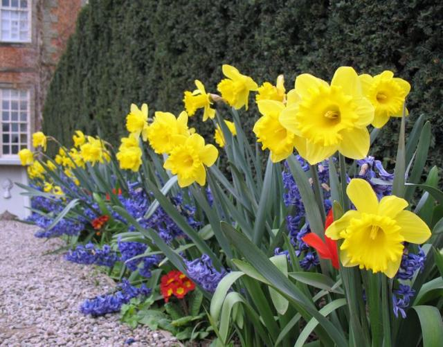 Bright colored Easter flower garden