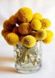 Yellow bulb flowers arrangement
