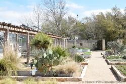 Cactus and Dry Climate Garden.jpg
