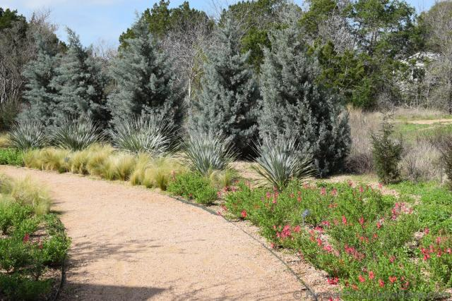 Path lined by Native Texas Plants.jpg