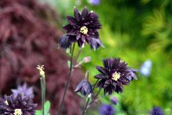 Black Flowers with Yellow Center in Ketchikan Alaska.jpg