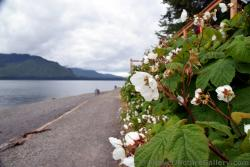 Alaska Flowers & Wildflower Pictures