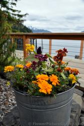 Flower Pot Icy Strait Point.jpg