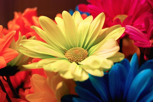 colorful wedding daisy flowers picture jpg