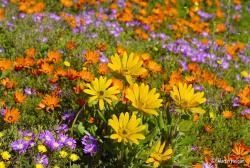 colorful flowers photo.jpg