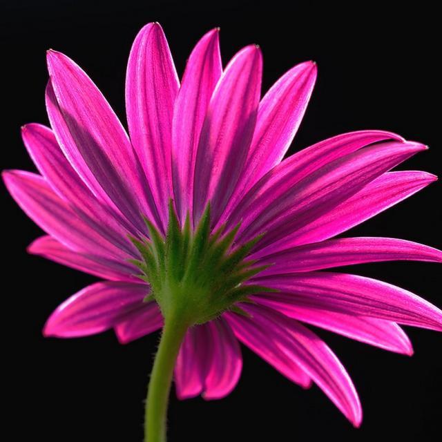 Colorful Daisy Flower.jpg Hi-Res 720p HD