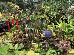 Carnivore Plants Lost World Cloud Forest Gardens by the Bay