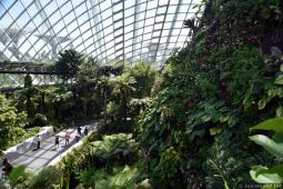 Inside Cloud Forest Dome with View of Supertrees