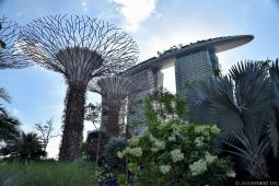 Marina Bay Sands and Supertrees