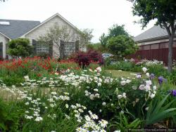 Beautiful Backyard Flower Garden