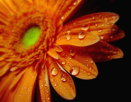 bright orange daisy picture.jpg