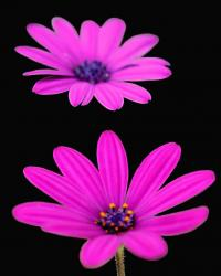 bright color daisy picture.jpg
