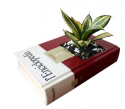 Decorative Planter Made of Old Recycled Book.PNG