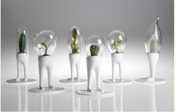Domsai Mini Terrarium For Small Cactus Plants By Designer Matteo
