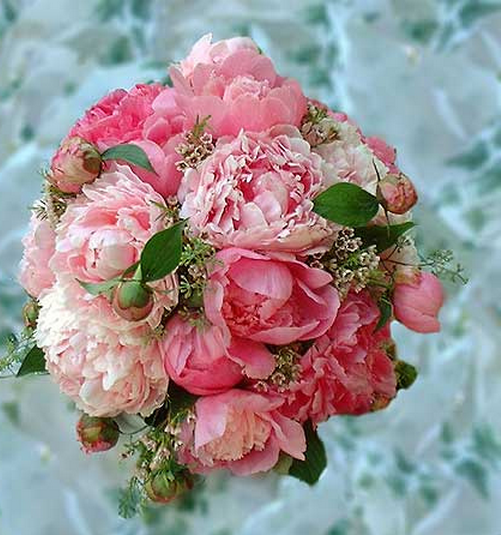 Image Of Peony Wedding Bouquet Floral Plant