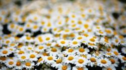white daisy bedding picture.jpg